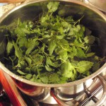 Stinging Nettles boiled for 20 minutes