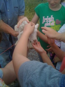 Powhatan Campers Petting Smith Meadows Lambs