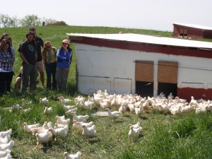Broilers on Pasture at Smith Meadows