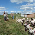 Farm Interns visit Turkeys at Smith Meadows