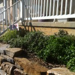 Herb Garden at Smith Meadows Kitchen