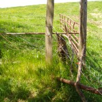 Now this is what I call old, dilapidated fence.  The brace is on the ground, the wire mashed, and the gate hanging by a single hinge.  Time for a new fence!