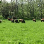 3 Secrets of Free-Range Farms