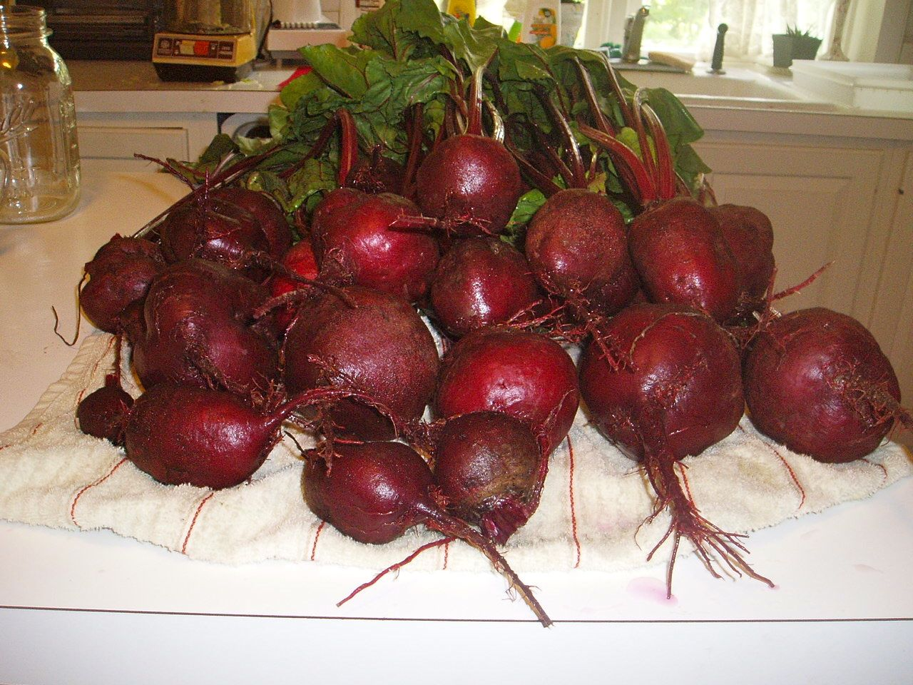 Beautiful, but these beets (and many more) were all ready to be picked at the same time.  These were shared with my family, but would have found happy homes at my local farmers market.