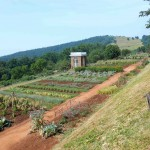 A 1,000 foot vegetable garden, literally hand-dug out of the side of the mountain over several years by slave labor.  Here, Jefferson experimented with seeds from all over the world, over 300 varieties in all.  On my visit, artichokes, beans and tomatoes were in full splendor.