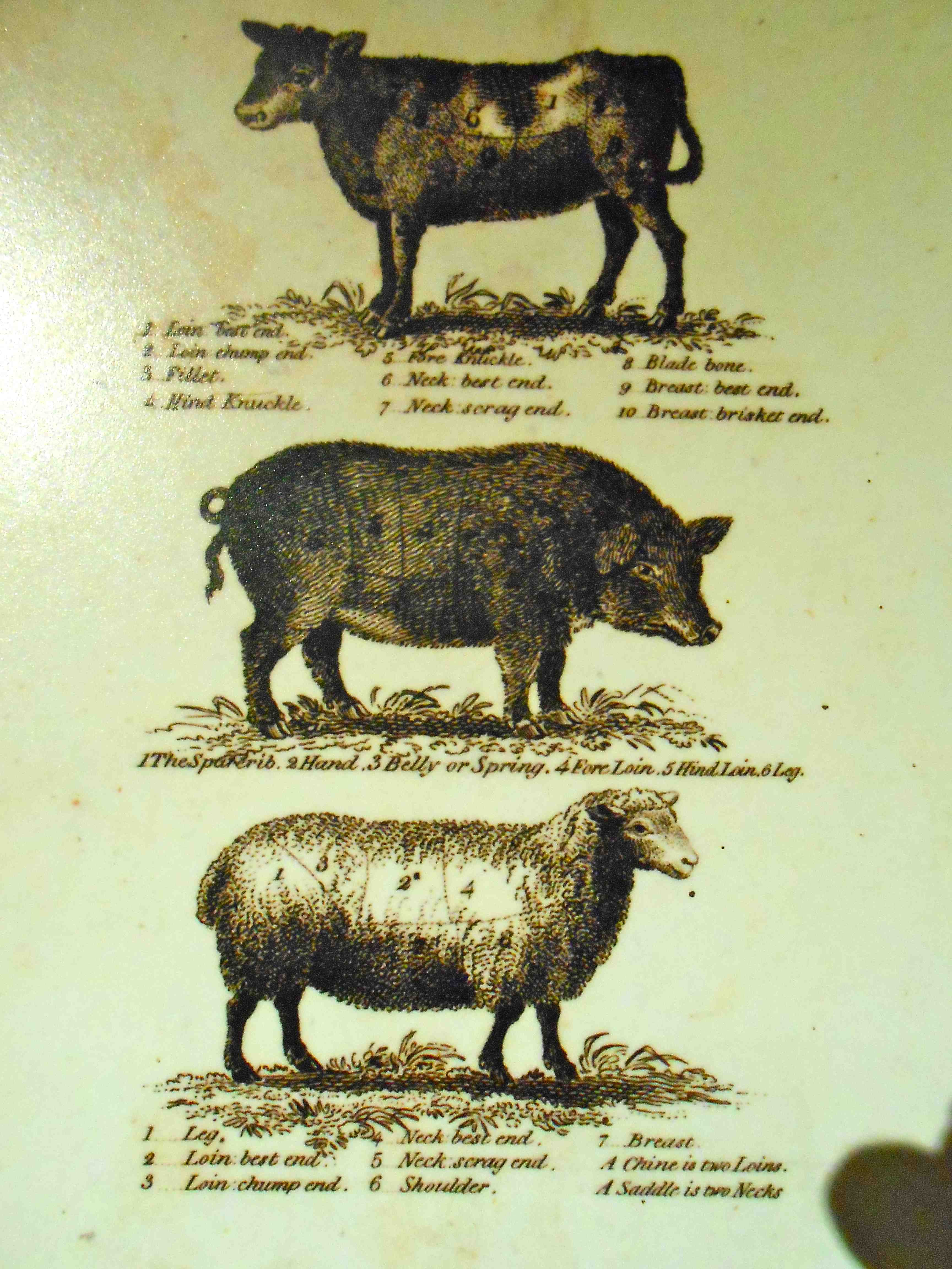 "As an organic livestock farmer, I wanted to know all about the animals Jefferson raised at Monticello.  In addition to the three species pictures above, chickens were kept for meat and eggs, and fish were kept on the mountaintop through use of ""live wells."""