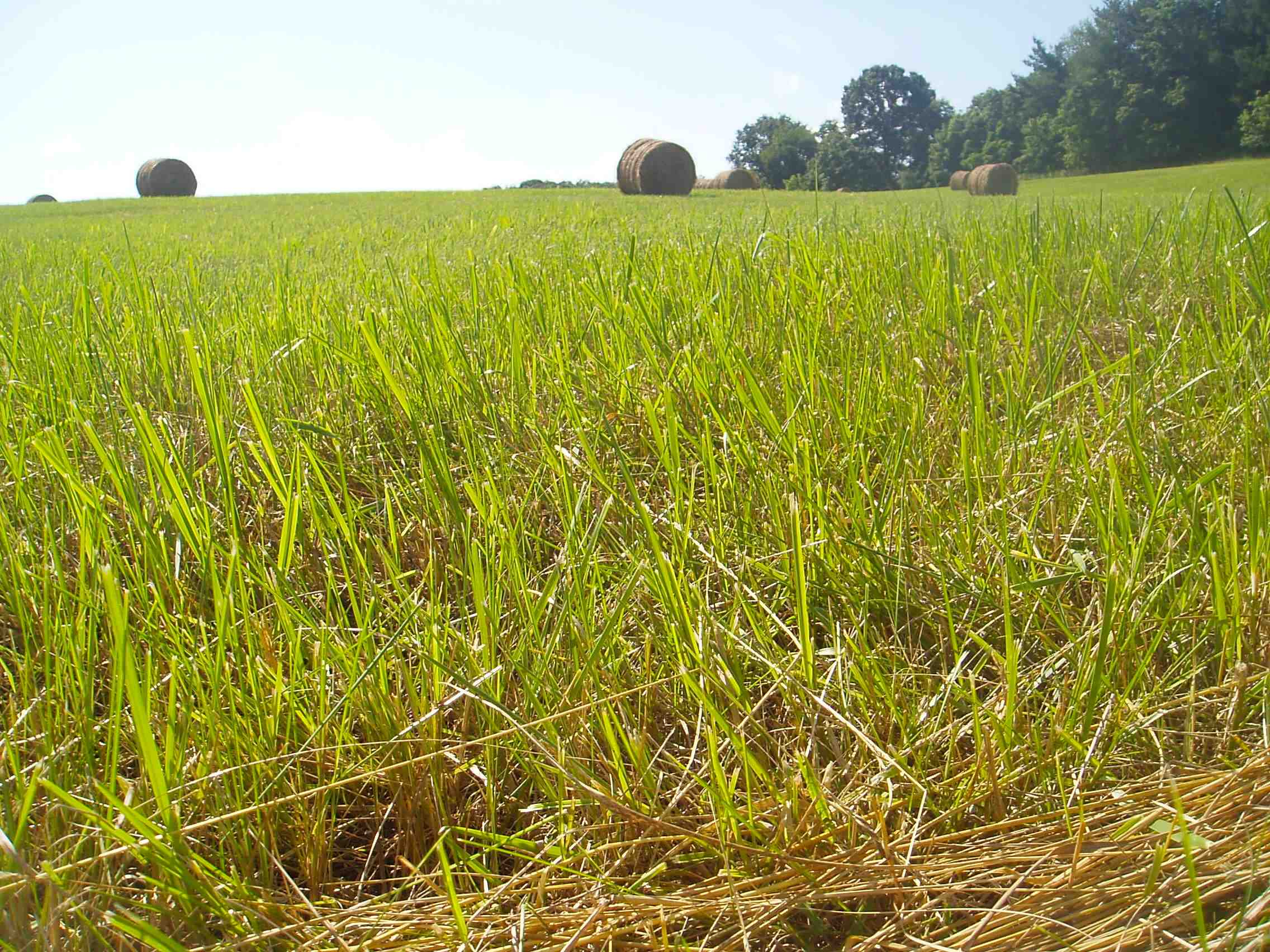 Pastures and hayfields comprise over 600 million acres in the United States, more than triple all types of grain fields combined.