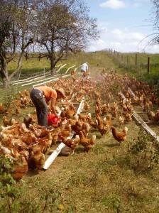 Chicken Coop Plans Free Range