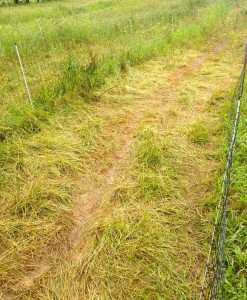 ...and a field trampled by chickens. Can you tell a big difference?
