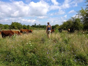 Summer portrait: walking out to check the cattle.