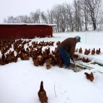 Shoveling out our chickens last winter.