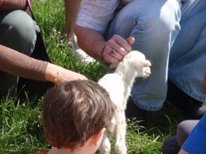 New Born Lamb at Smith Meadows