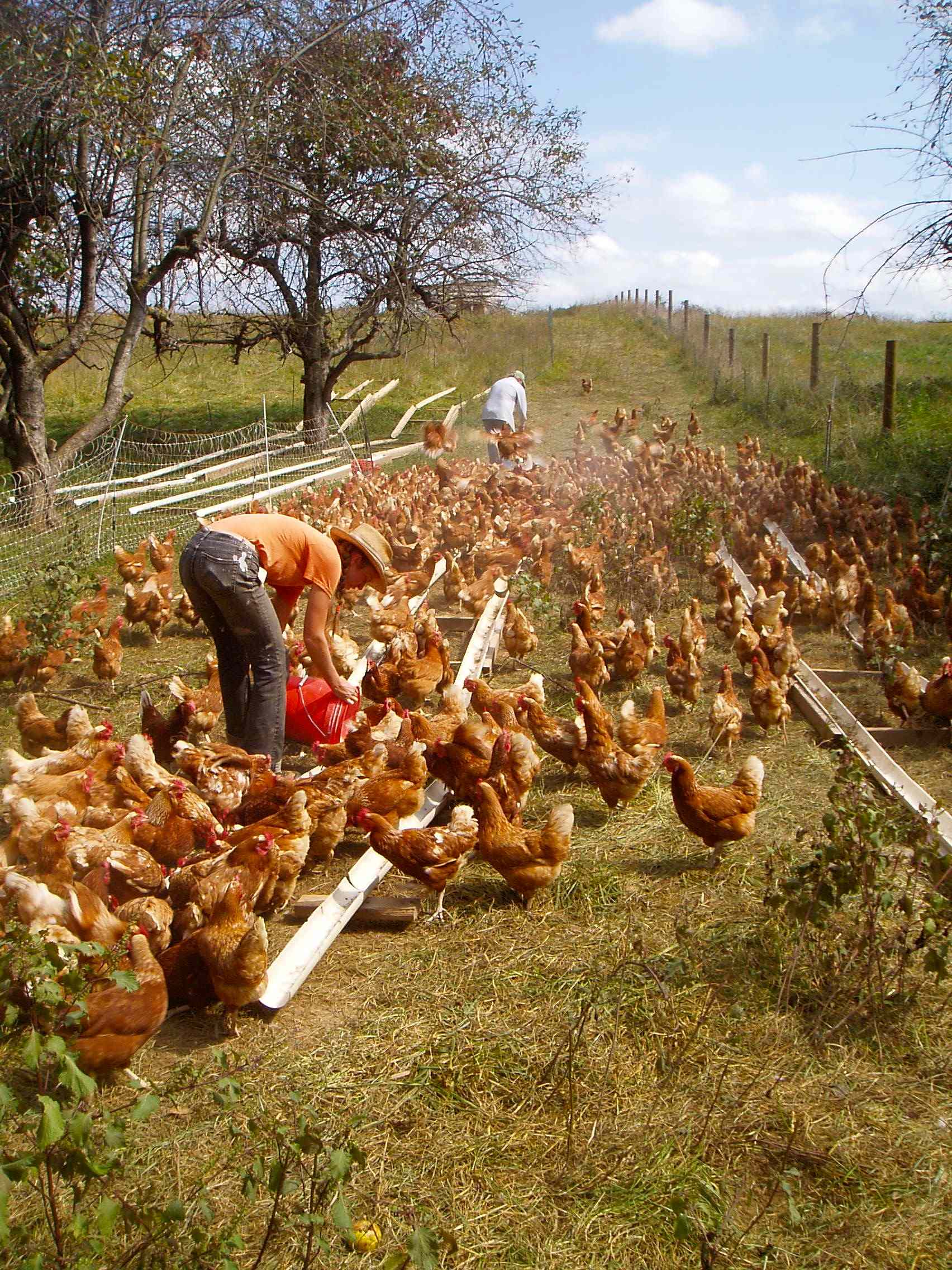 free range chicken farm near me