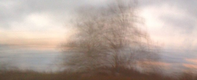 Blurry Tree against the sky